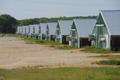 Photo of poultry houses, confined animal feeding operations.